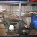 Half of a Liberta explorer which we use to house chinchillas and degus