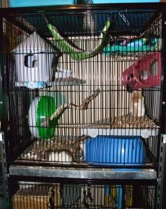 A liberta abode set up for rats