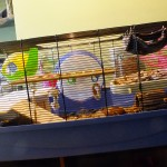 A 'barney' cage in which we house syrian hamsters