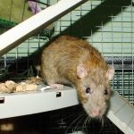 Gabriel is agouti. He is curious and sweet but a bit shy about being handled at the moment.