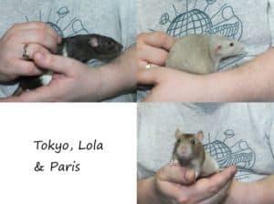 Tokyo, Lola and Paris