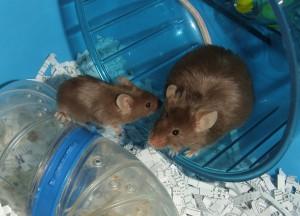 Minkie Mice