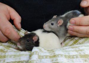 Pika and Yuki
