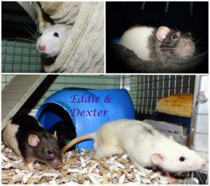 Eddie & Dexter
