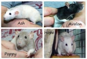 Ash, Avalon, Hope and Poppy